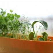 Натуральный органический продукт в ресторане Думка!