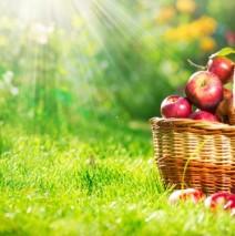 Предложение к яблочному спасу